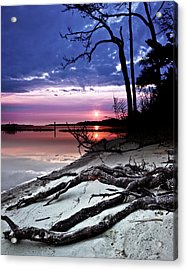 Acrylic Print featuring the photograph River Forest Sunset Exposed Twisted Tree Roots Beach Art Prints by Eszra