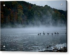 River Geese Acrylic Print