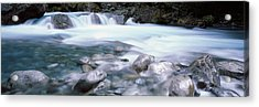 River, Hollyford River, Fiordland Acrylic Print by Panoramic Images