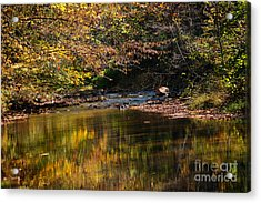 River In Autumn Acrylic Print by Lisa L Silva