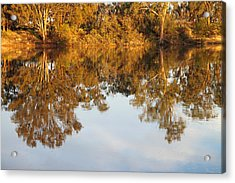 River Murray Reflections Early Evening Acrylic Print by Carole-Anne Fooks