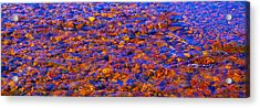River Song Abstract Acrylic Print