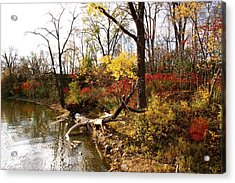 Riverfront In Fall Acrylic Print by Jocelyne Choquette