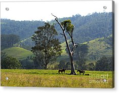 Riverwood Down Acrylic Print by Sandro Rossi