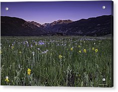 Rmnp Moraine Park Flora Sunrise Acrylic Print by Tom Wilbert