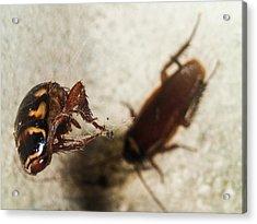 Roachs Demise Acrylic Print