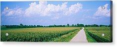 Road Along Corn Fields, Jo Daviess Acrylic Print by Panoramic Images