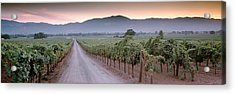 Road In A Vineyard, Napa Valley Acrylic Print by Panoramic Images