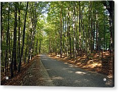 Road In Forest  Acrylic Print by Ioan Panaite