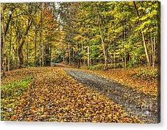 Road Into Woods Acrylic Print