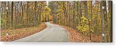 Road Passing Through A Forest, Brown Acrylic Print by Panoramic Images
