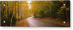 Road Passing Through A Forest, Park Acrylic Print by Panoramic Images