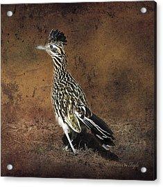 Road Runner 2 Acrylic Print by Karen Slagle