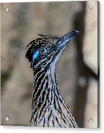 Acrylic Print featuring the photograph Road Runner by Elaine Malott
