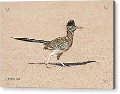 Road Runner On The Road Acrylic Print by Tom Janca