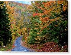 Acrylic Print featuring the photograph Road Through Autumn Woods by Larry Landolfi