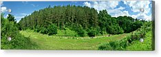 Road Through Forest Acrylic Print by Panoramic Images