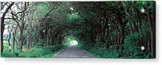 Road Through Trees Marion County Acrylic Print