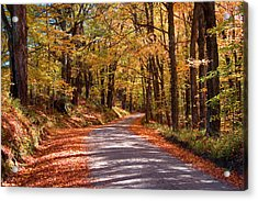 Acrylic Print featuring the photograph Road Through Woods by Larry Landolfi