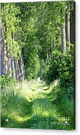 Road To Bruges Acrylic Print by Carol Groenen