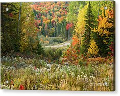 Road To Quill Hill Acrylic Print