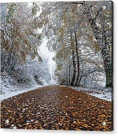Road To Winter Acrylic Print