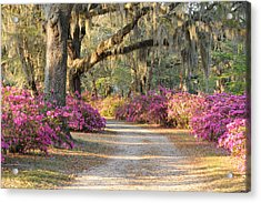 Road With Live Oaks And Azaleas Acrylic Print