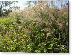 Acrylic Print featuring the photograph Roadside Blooms by Jose Oquendo