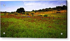 Roadside Flowers Acrylic Print by Tamyra Ayles