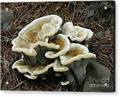 Acrylic Print featuring the photograph Roadside Treasure by Chalet Roome-Rigdon