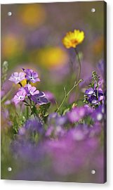 Roadside Wildflowers In Texas, Spring Acrylic Print by Larry Ditto