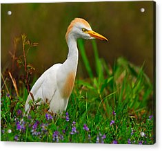 Roaming Through The Field Acrylic Print by Tony Beck