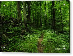 Acrylic Print featuring the photograph Roaring Fork Trail by Debbie Green