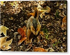 Robbie The Squirrel - 5173 F Acrylic Print by James Ahn