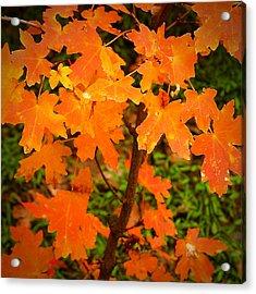 Robert Melvin - Fine Art Photography - Autumn Orange Acrylic Print