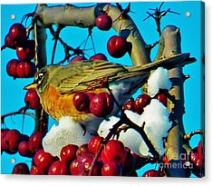 Robin And Crab Apples Acrylic Print