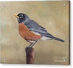 Robin Acrylic Print by Charlotte Yealey
