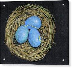 Robin Eggs In Nest Acrylic Print by Joyce Geleynse