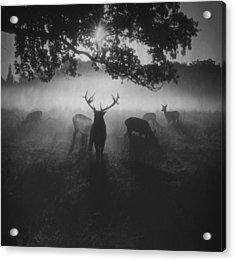 Robin Hood Woods Acrylic Print by Robert Fabrowski