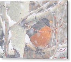 Robin In April Snow Acrylic Print