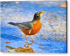 Robin In Florida Acrylic Print by Deborah Benoit