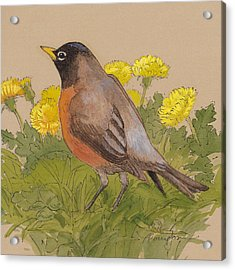 Robin In The Dandelions Acrylic Print by Tracie Thompson