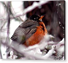 Acrylic Print featuring the photograph Robins' Patience by Lesa Fine