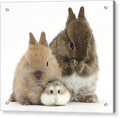 Roborovski Hamster And Rabbits Acrylic Print