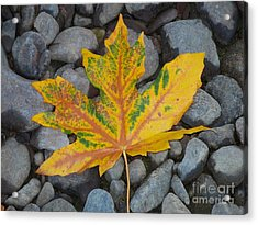 Acrylic Print featuring the photograph Rock Creek Leaf by Chalet Roome-Rigdon