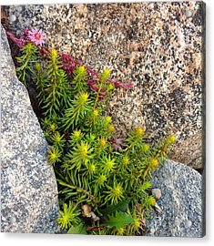 Acrylic Print featuring the photograph Rock Flower by Meghan at FireBonnet Art