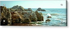 Rock Formations At A Coast, Bird Rock Acrylic Print by Panoramic Images