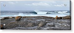 Rock On Boat Harbour Acrylic Print