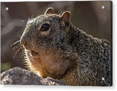 Acrylic Print featuring the photograph Rock Squirrel by Beverly Parks