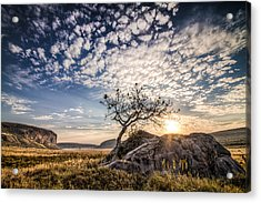 Rock Tree And Rising Sun Acrylic Print